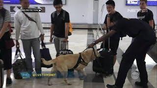 vuclip Simulasi Pelatihan Anjing Pelacak di Bandara Soekarno Hatta - Customs Protection