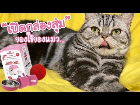 """เปิดกล่องสำหรับชาวทาสแมวกันแล้วนะ กับ""""Royal Canin Limited edition kit"""" ต้องมาลุ้นเองว่าข้างในคืออะไร"""