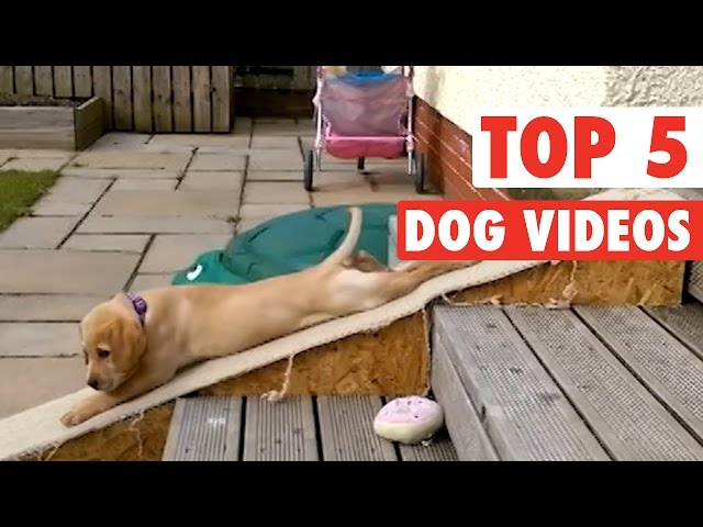 Top 5 Dog Videos || Jan 15 2016