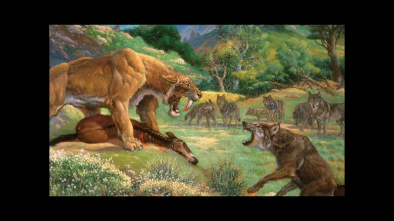 Dire wolf vs wolf - photo#14