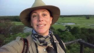 The Pantanal - the best wildlife watching in the Americas!