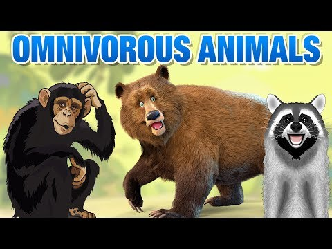Omnivorous Animals Names | Simba Tv | Omnivores Animals Names List | Educational Video