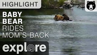 Baby Bear Backpack - Katmai National Park - Live Cam Highlight thumbnail