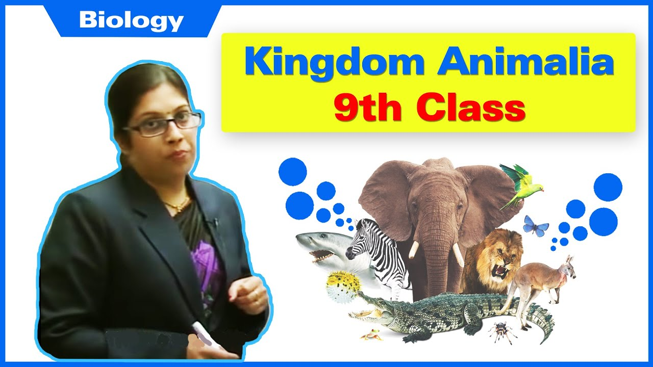9th Class- Kingdom Animalia - YouTube
