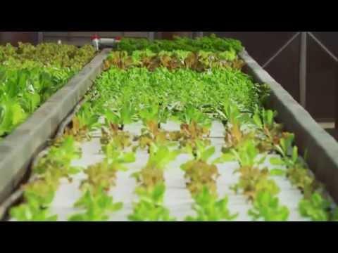 Aquaponics System Farm North Carolina   Organic Produce