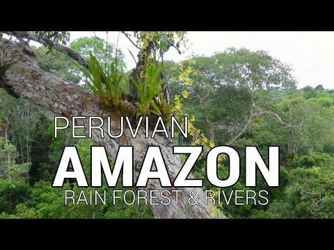 Amazon rainforest, Amazon river, and Napo river via Iquitos, Peru.