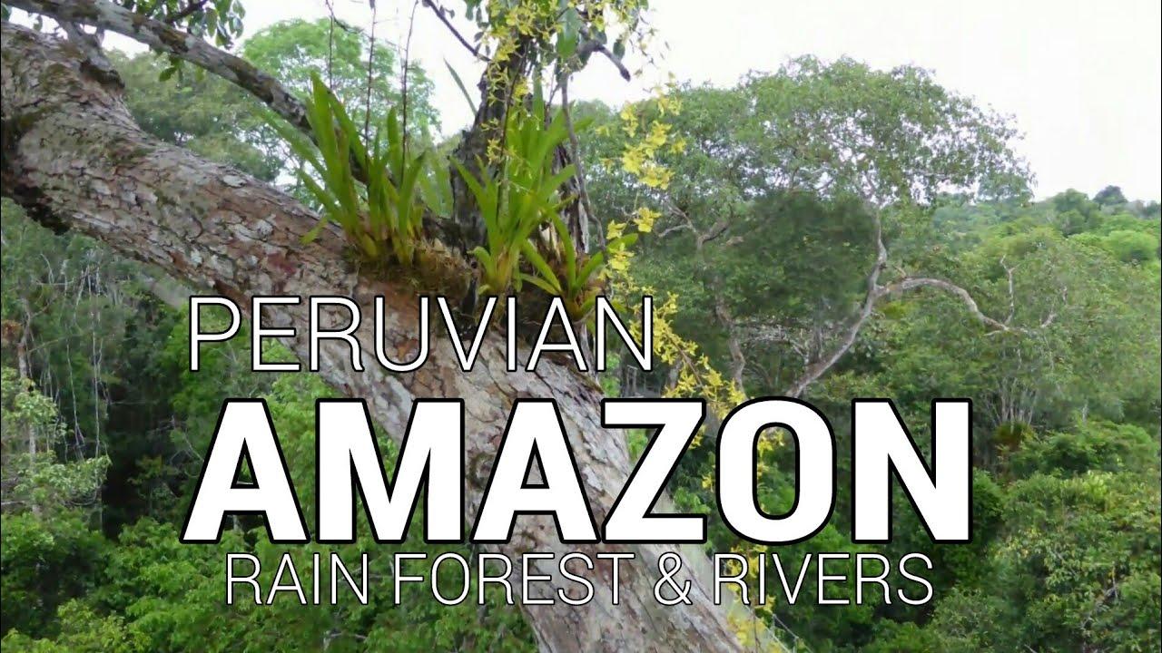 peruvian amazon company deutsch