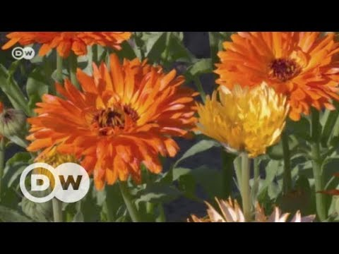Digital garden: Just a toy or healthy living? | DW English