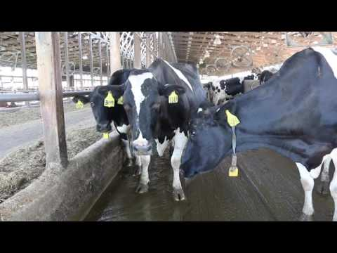 Environmental Control Of Livestock And Poultry Housing