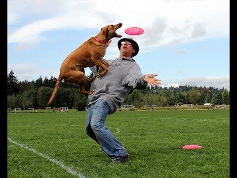 Dog Trick Training -- Back-stall (advanced trick)