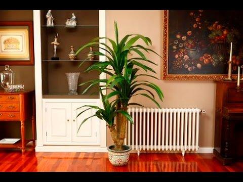 Qu tipos de plantas colocar dentro de la casa youtube for Modelo de proyecto de plantas ornamentales