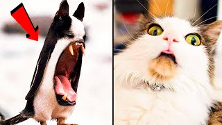 Funny Cat Videos That Will Smile You Laugh All Day Long