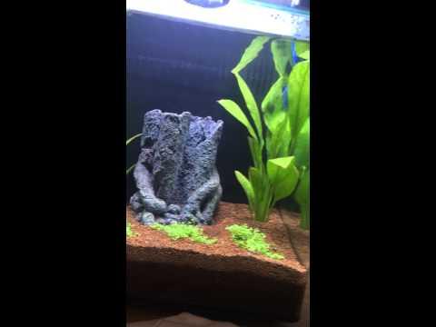 Tropical fish (aqua nano one) 22 litre