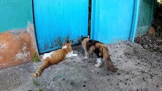 """Мини-фильм """"Из жизни домашних"""" *** Кошки и собаки"""
