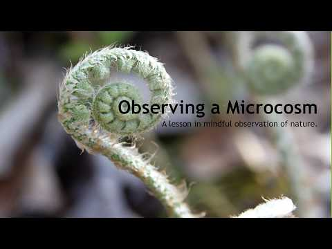 Observing a Microcosm