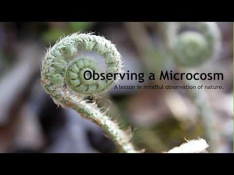 Observing a Microcosm