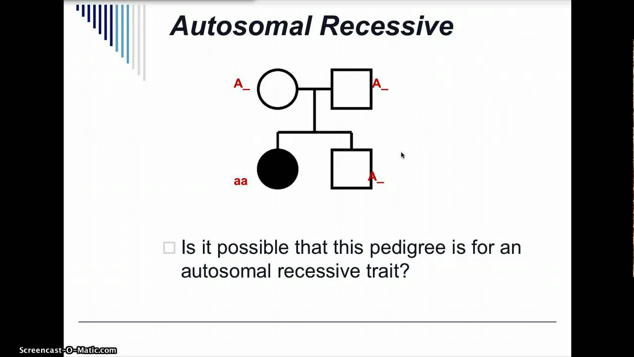Pedigree Analysis Practice YouTube – Pedigree Practice Worksheets