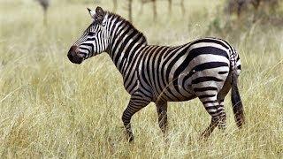 Африка джунгли абизиан секс