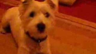 My dog sings along to match of the Day.