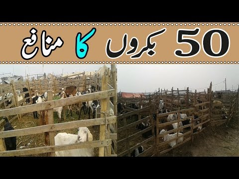 Goat Farming Business Plan - Small Business Idea - Goat Farming in Pakistan
