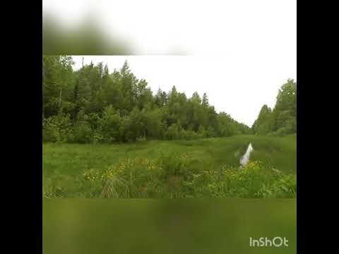 Yamaha Serow 225. Старая лесовозная дорога