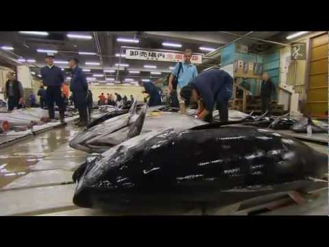 Pesca extrema com Robson Green.The World Tour-JAPAN.HD.mkv