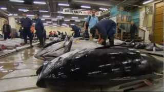 Pesca extrema com Robson Green.The World Tour-JAPAN.HD.mkv
