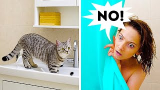 25 CAT AND DOG HACKS AND CRAFTS