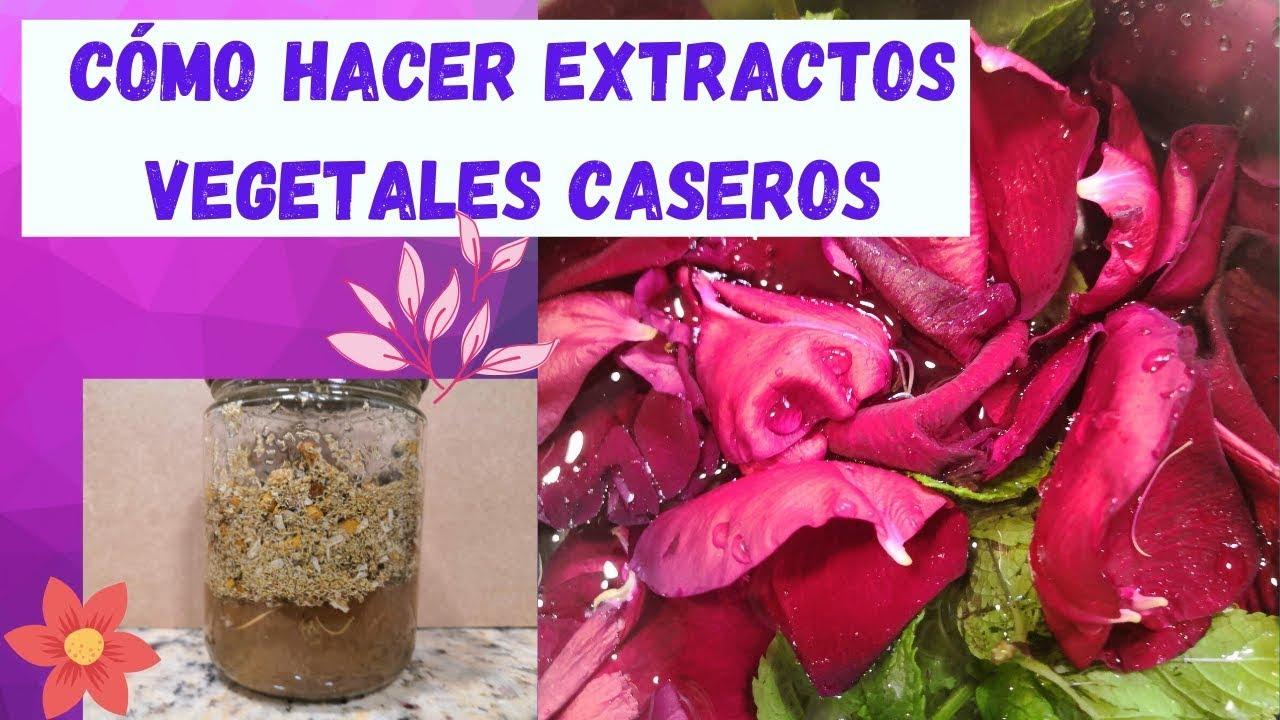 Cómo hacer EXTRACTOS CASEROS de PLANTAS, FLORES, CORTEZAS, VEGETALES 😮🌿🌸🍃