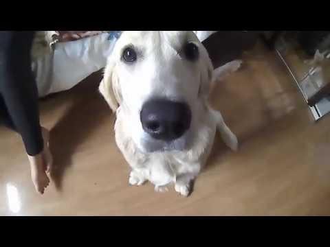 тест камеры на примере моего Пса)