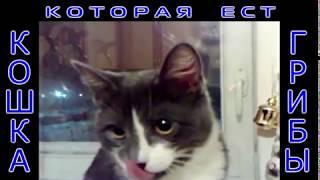 Кошка которая ест грибы