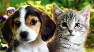 Изучаем домашних животных, обучающее видео для детей, развивающие мультики, мисс Кэти мистер Макс