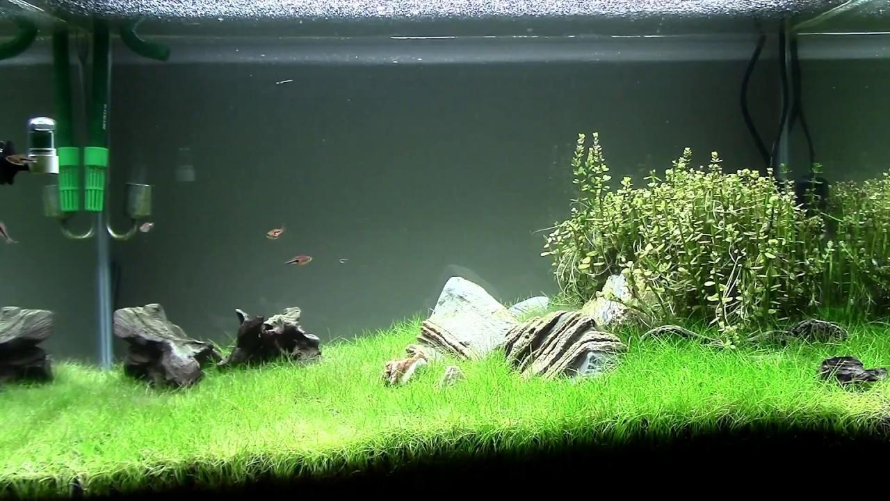 Paisajismo acuático  time lapse