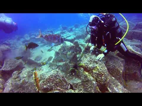 Tenerife Diving - Los Gigantes