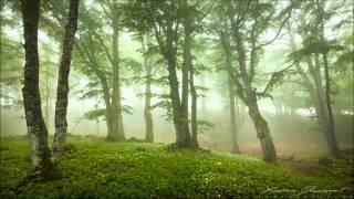 Theory - Jungle Soul