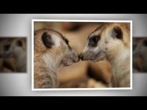 thực hành sinh 7 - xem băng hình về đời sống và tập tình của thú : Tập tính sinh sản