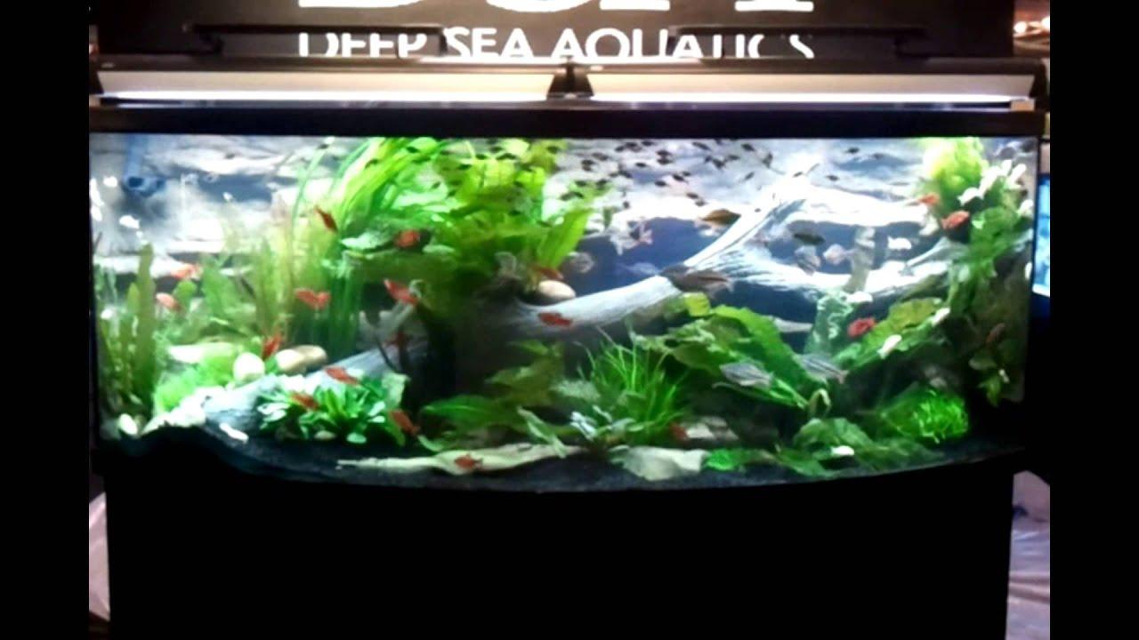Freshwater fish killers - Fastest Fish In The World Freshwater Aquarium Fish