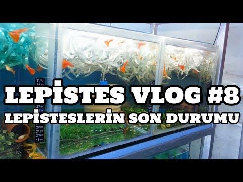 Lepistes Vlog #8 (Lepisteslerin Son Durumu)