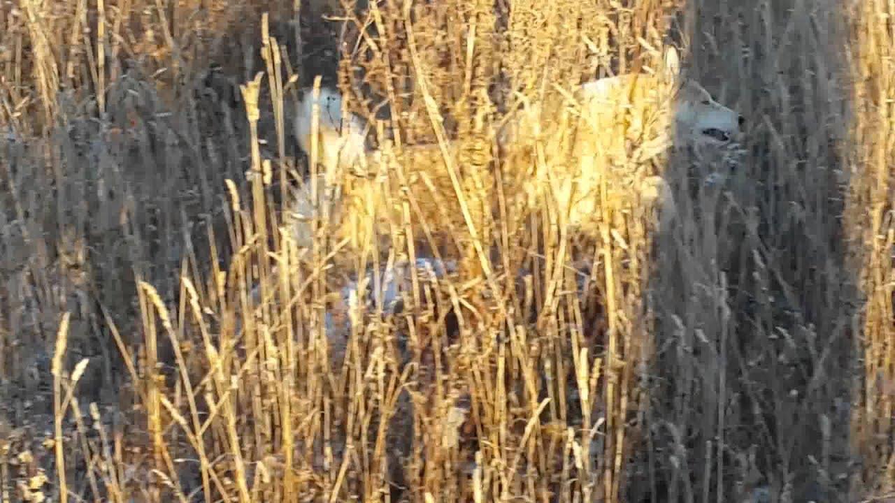 Охота на фазана в Хмельницкой области - YouTube
