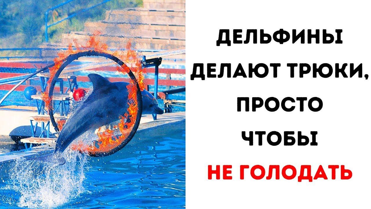 8 причин никогда не ходить в дельфинарий