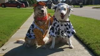 Two Dogs Dressed In Costumes Adorably Pose For Photograph - 1076046