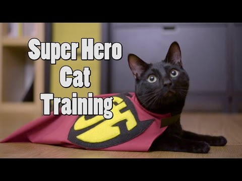 N2 the Talking Cat S4 Ep25 - Super Hero Cat Training