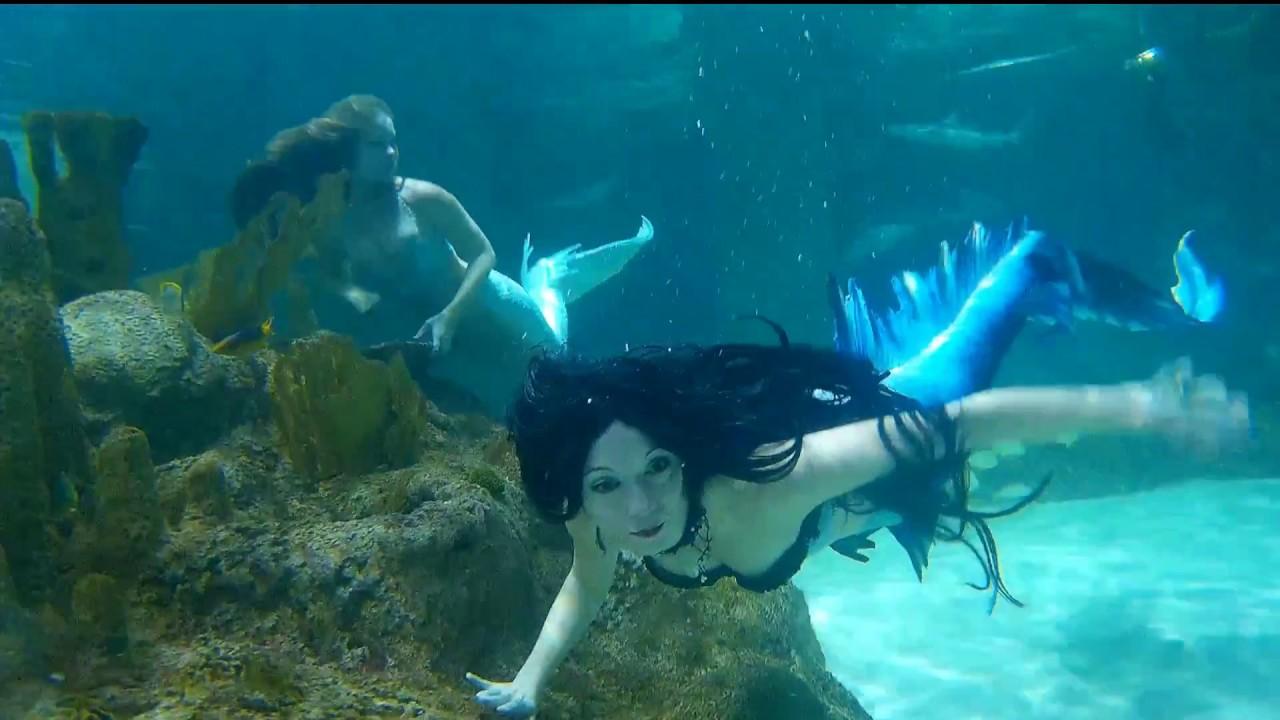 Unexplained Creatures Coral Reef Aquarium Me...