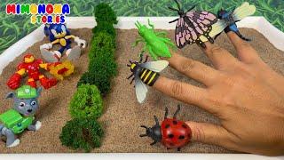 Nombres de Insectos 🐞🦋 Grillo Libelula Cienpies Escarabajo Escorpion y mas ✨ Mimonona Stories