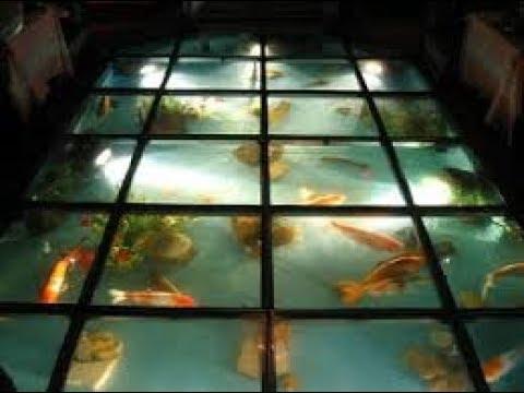 lantai kaca di bawah kolam ikan rumah minimalis - youtube