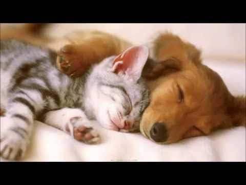 Cute and Funny Pet Video of Dogs, Cats, Kittens, Puppies ... FULL HD