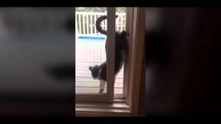 Кот возвращается домой Cat returns home 720p'