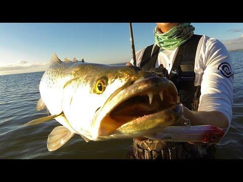 F*&KING AGGRESSIVE Fish CRUSH Our LURES!!! thumbnail