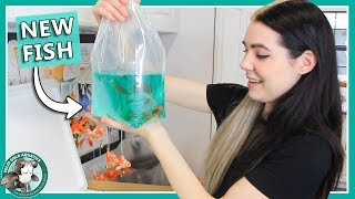 Unboxing My New Goldfish