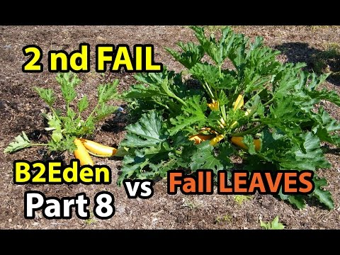 Back to Eden Organic Gardening 101 Method with Wood Chips VS Leaves Composting Garden Series  # 8